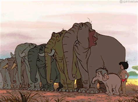 nedlasting filmer the elephant man gratis bilder och animerade bilder fr 229 n hathi och elefanter