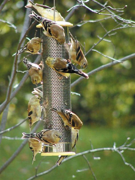 yellow finch feeder nyjer bird stuff at cooperseeds com