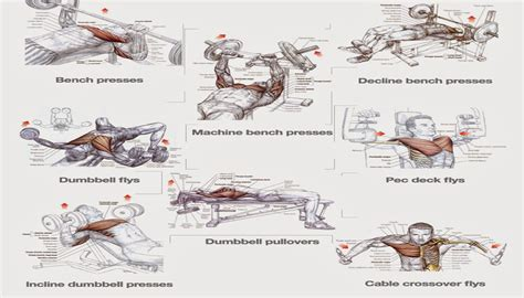 chest workouts to gain fast project next