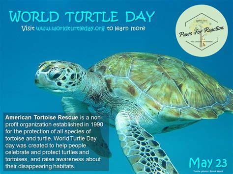 Day 5 Turtles by Worldturtleday Is May23 Americantortoiserescue Paperblog