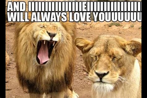 Funny Love Memes For Her - i love you memes for her funny image memes at relatably com