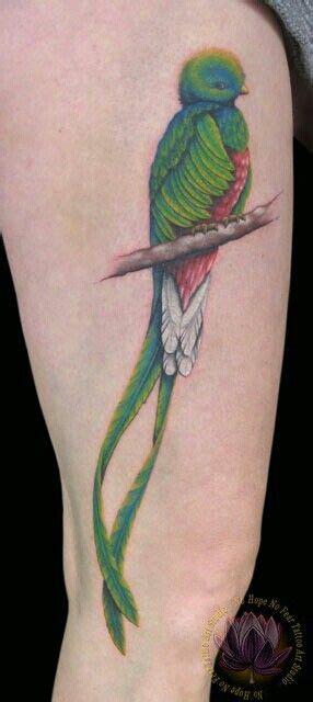 imagenes de tatuajes de quetzal quetzal bird the national bird of guatemala i want this
