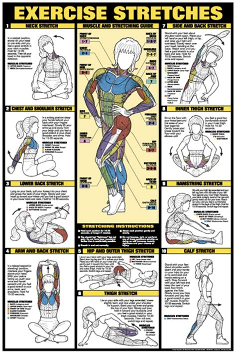 workout diagram exercise stretches poster laminated fitness charts