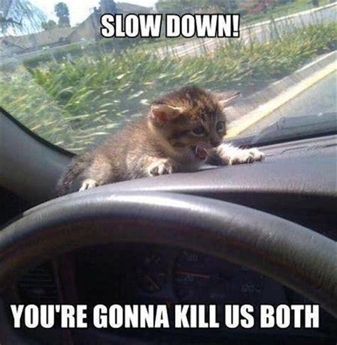 Animal Meme Pictures - animal car meme 01