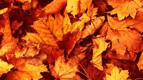 autumn leaves wallpaper awesome natural autumn leaves wallpaper