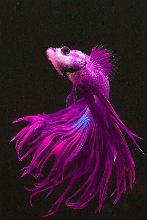 beautiful blue color 1000 images about tropical fishes on pinterest cichlids