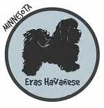 havanese breeders mn havanese breeders in minnesota havanese puppies for sale mn