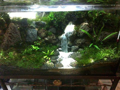 kumpulan foto aquarium aquascape keren dunia motor