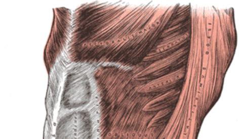 esercizi addominali obliqui interni come si allenano gli addominali obliqui per togliere le