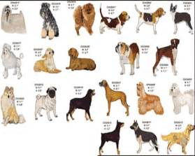 My top collection dog breeds 5