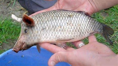 pictures of fishing image result for fish walmartians and other oddities