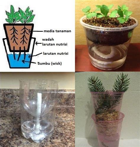 cara membuat nutrisi hidroponik yang benar tips cara berkebun hidroponik sederhana di rumah untuk