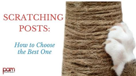 how to keep your cat from scratching your couch cat scratching posts keep your cat from scratching furniture
