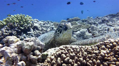 dive cook islands aitutaki scuba diving resorts liveaboards diving aitutaki