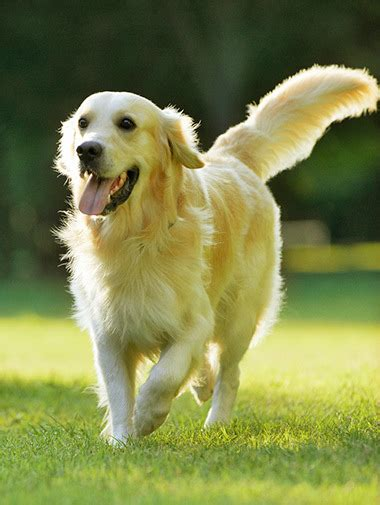 what breed is best for me quiz best for me quiz uk is cesar food bad for dogs