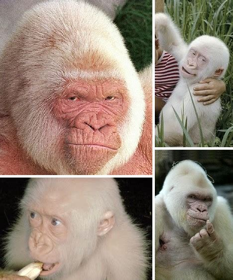 Voal Mono Blue By Raia by 7 Animales Albinos Maravillas Blancas Mundo Animal