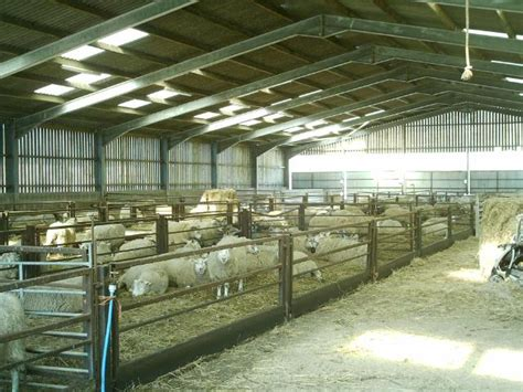 Sheep Lambing Sheds by Lambing Photos