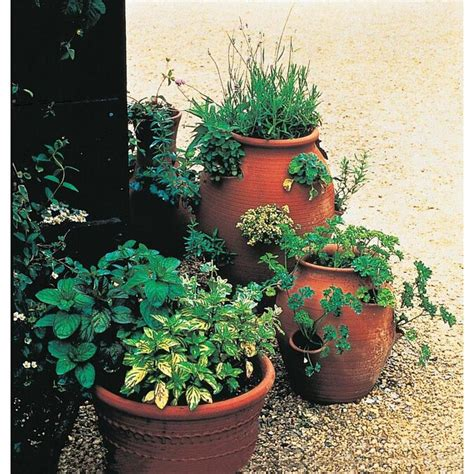 gardens alive gurneys  count variety herb lovers seed