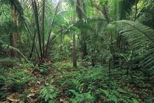 tropical rainforest endangered plants endangered plants in the forest sciencing