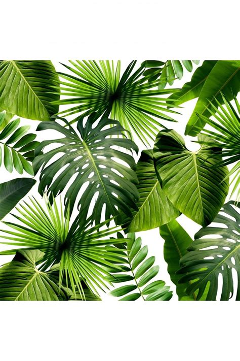 Plants Used For Paper - 25 best ideas about tropical leaves on
