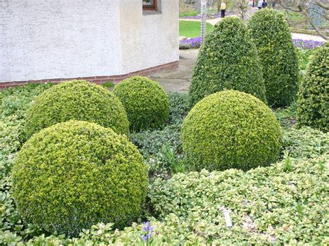 Beet Mit Buchsbaum Gestalten by Buchsbaum Kugel Buxus Sempervirens Kugel Baumschule