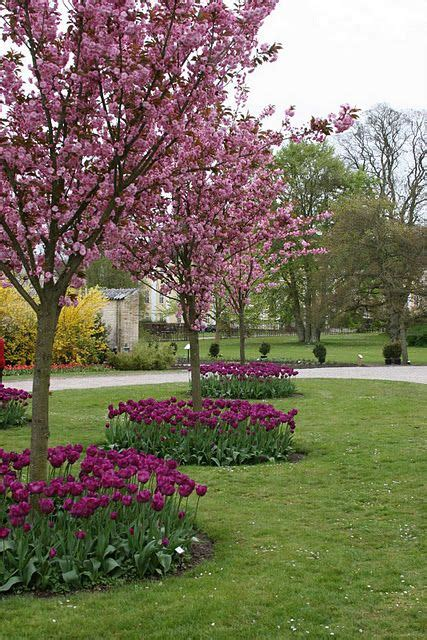landscaping  trees ideas