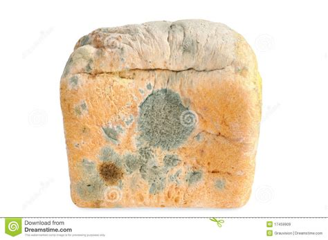moldy bread isolated royalty free stock images image