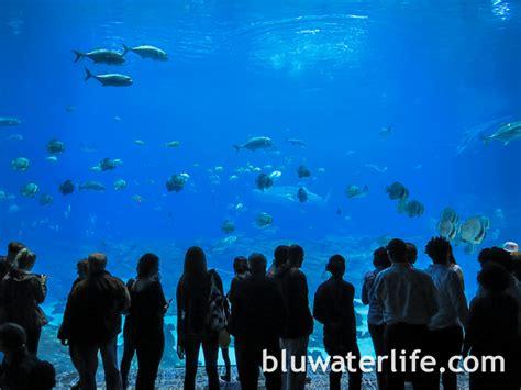 Lu Aquarium 2015 aquarium whale sharks 10 bluwaterlife