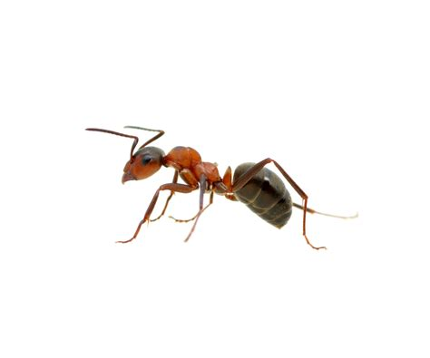 Green Kitchen Nyc - ant infestations amp problems pest control nyc long island