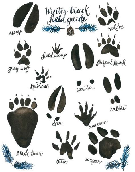 printable animal footprints 17 best ideas about giclee print on pinterest doodle