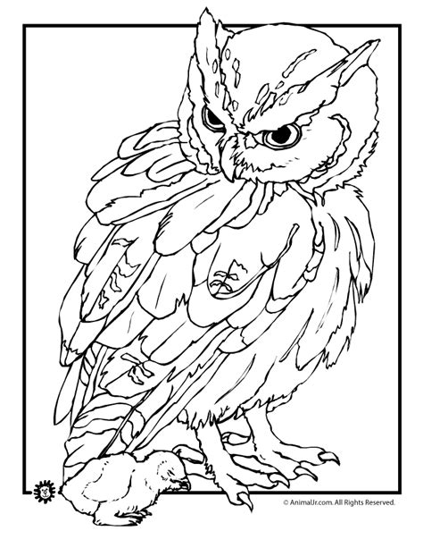 coloring ideas fancy realistic animal coloring pages 23 on gallery