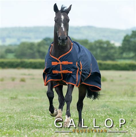 100g turnout rug gallop 100g lightweight fill weight turnout outdoor rug fast tack direct