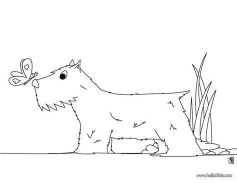 schnauzer terrier coloring page dog breeds picture