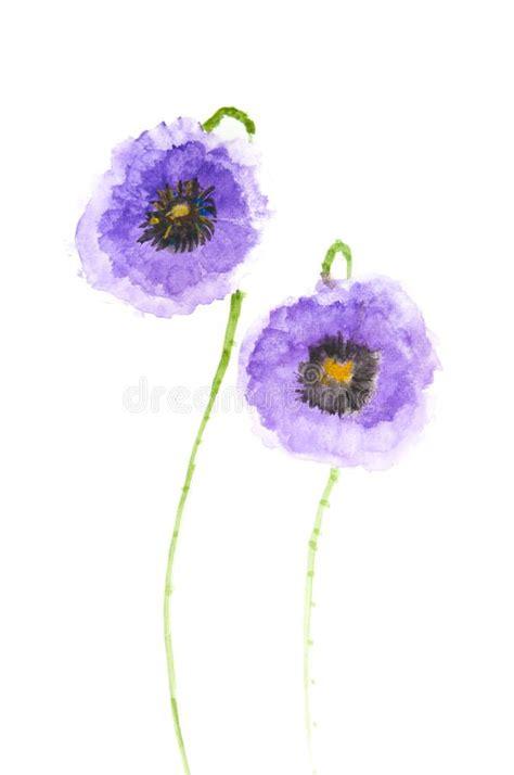 poppy flower colors purple poppy flowers acrylic painting stock illustration