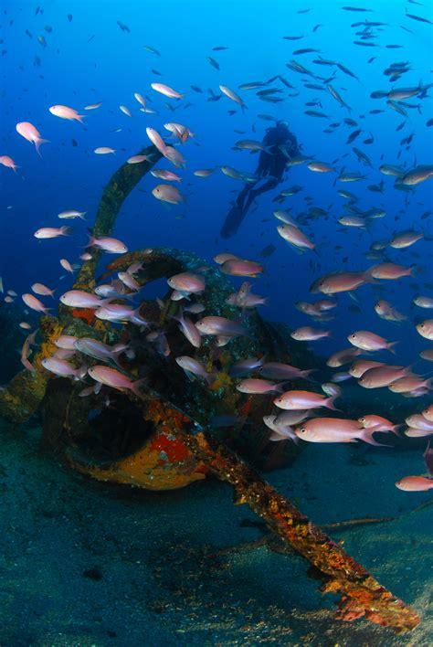 le de plongee plong 233 e 224 la d 233 couverte des 233 paves en rade toulonnaise la seyne sur mer var matin