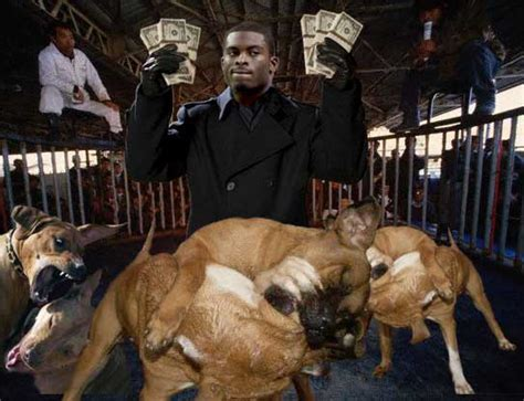 michael vick dogs michael vick indicted on dogfighting charges