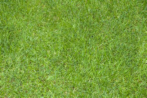 grass background pattern free full frame green grass texture pattern pictures free
