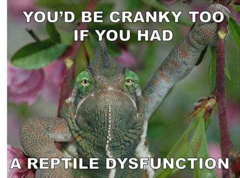 Reptile Memes - silly funny reptile humor makes me lol gt really pinterest