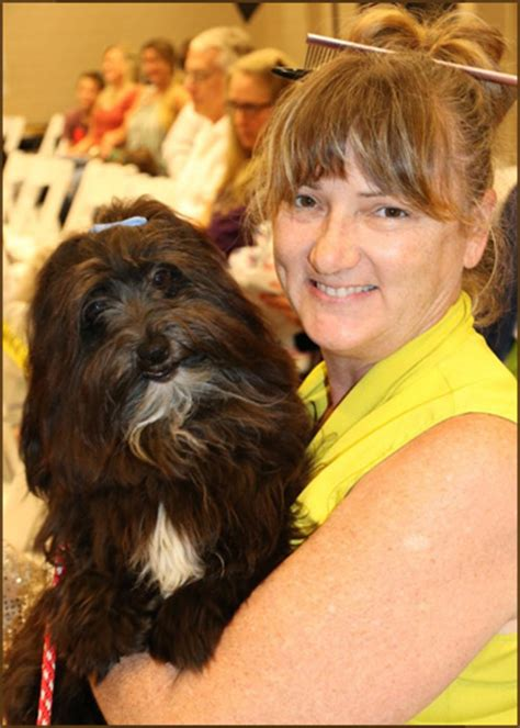 wysteria havanese welcome to the new home of rockhurst havanese