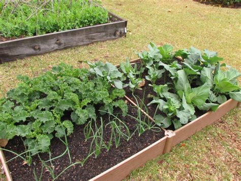 Raised Bed Garden Kits by Win Raised Garden Bed Kit And Planting Kit