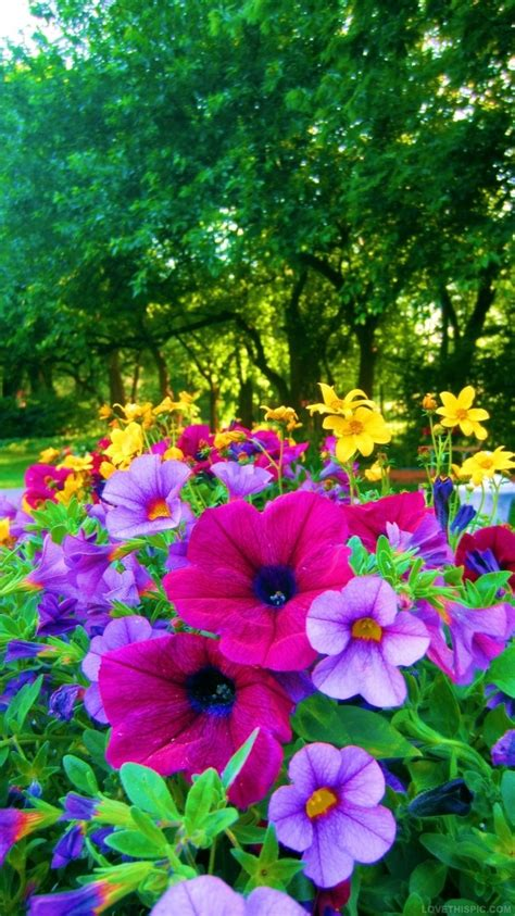 Bright Colored Flowers For The Garden Pictures Photos Colorful Flower Garden