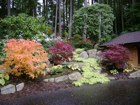 pacific northwest landscaping ideas traditional landscape by cambium inc gardening