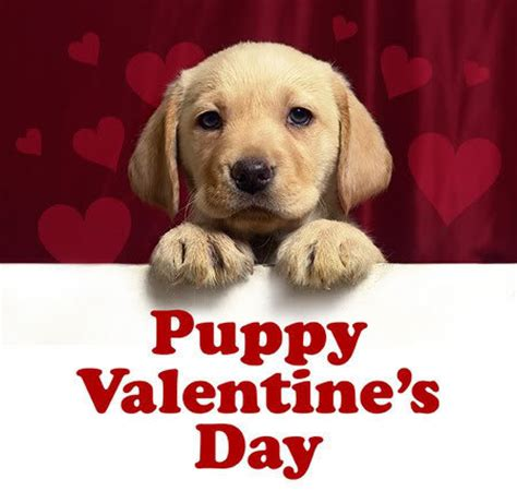 valentines puppy puppy dogs photo 33628011 fanpop