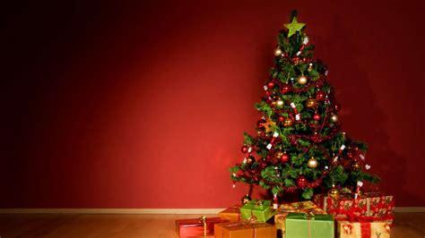 tannen einmaleins welchen weihnachtsbaum soll ich kaufen