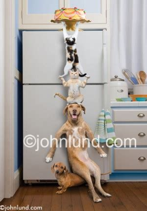 Helpless Dogs And Cats Are For Your Help by Animal Quotes Work Quotesgram