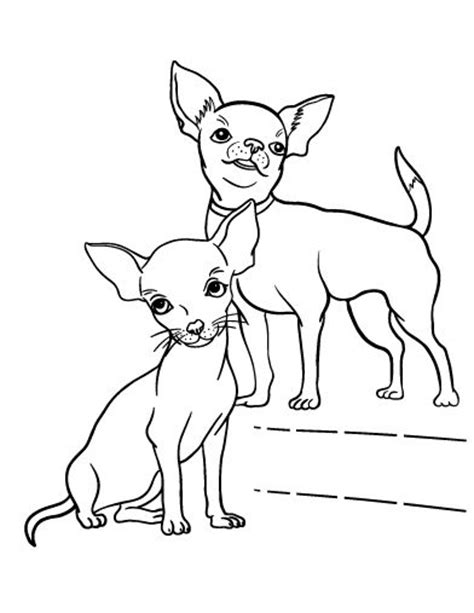 cute chihuahua coloring pages les 105 meilleures images 224 propos de coloring pages dogs