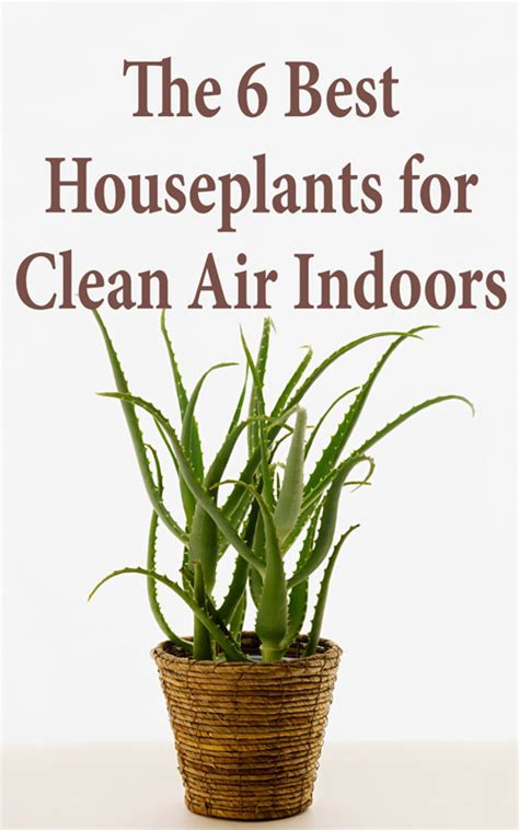 best houseplants for clean air the 6 best houseplants for clean air indoors countryside