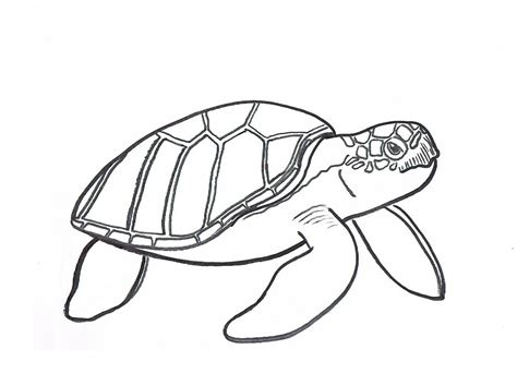 turtles coloring free printable turtle coloring pages for animal place