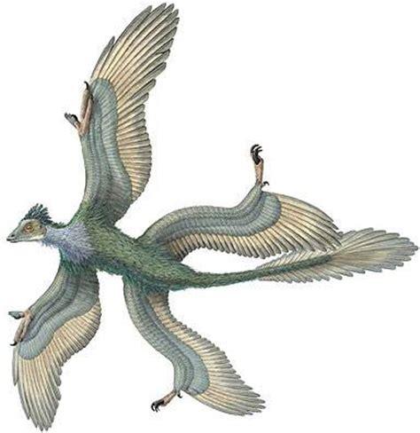 dinosauro volante l arengario sta