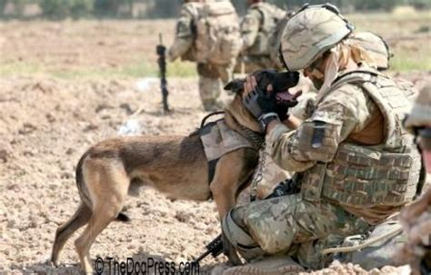 combat dogs modern war dogs k 9 corps dogs navy seal paratroopers